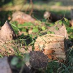 Logs; overwintering areas for insects and hedgehogs