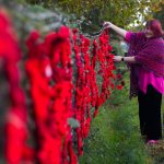 1,391 poppies are hung on the hedge.